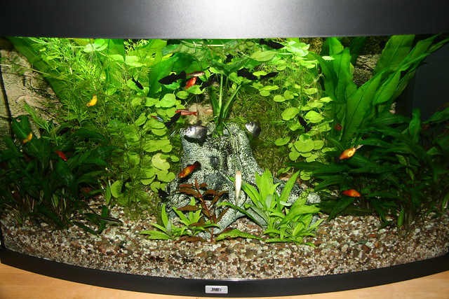 Aquarium from Thomas W. from Germany