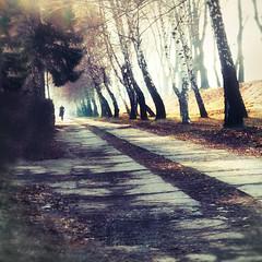 Out of the Light #3 (Tanjica Perovic) Tags: path trees mist morning light sun winter person solitary walk pirot alley kej serbia srbija birchtrees vanishingpoint atmospheric lines sigma1770mmf2845dcmacro perspective distance mood pirotsrbija pirotski pirotserbia pirotskicilim pirotskikej pirotkej kejnanisavi nisava нишава кејнанишави tanjicaperovic тањицаперовић photography tanjicaperovicphotography фотографија fotografija srpski српски fotograf фотограф photographer fotografijepirota floodbarrier barrieragainstflooding svetozarmisirlic quay floodingprotection throughherlens
