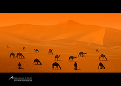 :D (Abdulrahman Alyousef [ @alyouseff ]) Tags: canon photo yahoo nikon flickr 7d 70200     2470                 d80   abdulrahman                    d300s        alyousef           fecbook