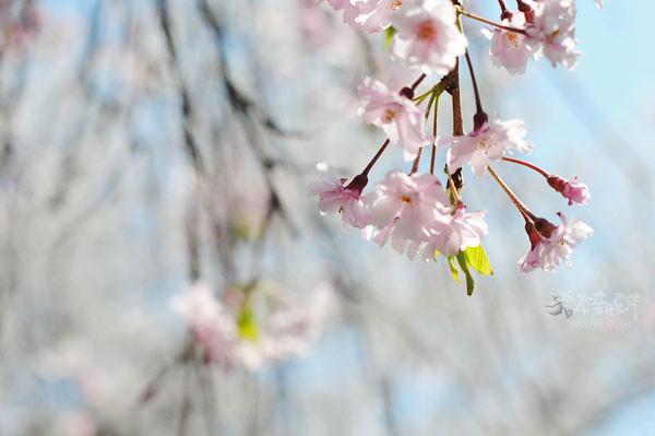 粉嫩的花瓣