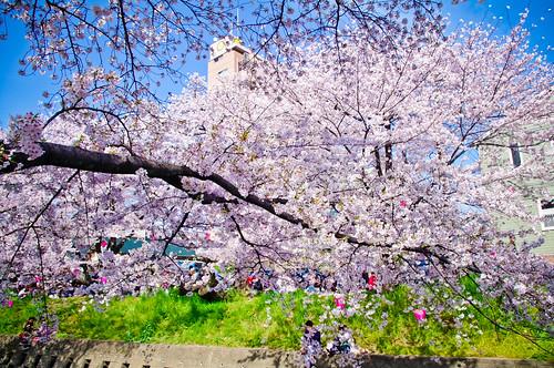Iwakura Gojyogawa 2011 by monoblogoo