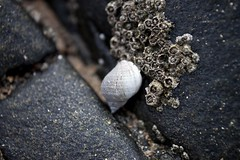 14-4-2011 (Copperhobnob) Tags: rock sand shell stcombsbeach