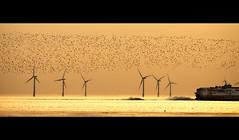 The birds, Chased, Crosby (Ianmoran1970) Tags: sunset beach birds flock leavingparty crosby starlings chased seeingoff ianmoran ianmoran1970