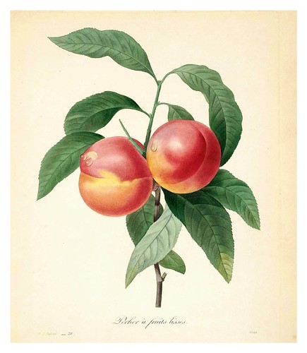 003-Melocoton liso-Choix des plus belles fleurs…1827- P.J.Redoute