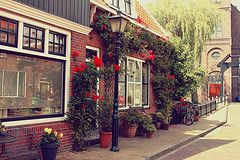 ( ~ ) Tags: pink flowers red netherlands rose