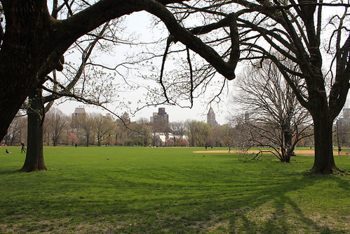 Great Lawn Trees
