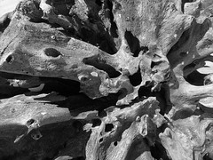 Textura madera 1 (Marcelflor) Tags: textura gris madera playa tronco conchas piedra