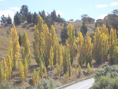 Poplars (ally portugal) Tags: snowymountains southnsw heidisteahouse lakejidabyne