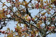 Botanical Garden in d (x-oph) Tags: garden botanical spring poland polen lodz d wiosna botanik ogrd botaniczny