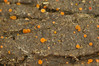 Fungi? (Dingilingi) Tags: nationalpark p catalunya pirineus pirineo parquenacional aiguestortes pyrynees