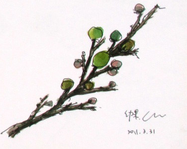 枋山愛文芒果的幼果