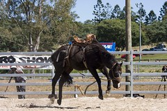 IMG_8769 (indy turtle) Tags: horse brisbanemeetup daybororodeo