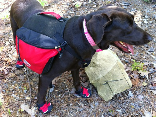Coco testing out her hiking boots