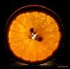 A slice of Orange....... (aroon_kalandy) Tags: lighting light orange india color macro beauty creativity lights asia artistic sony awesome creative kerala greatshot impressions calicut kozhikode topshots beautifulshot anawesomeshot sliceoforange malayalikkoottam aroonkalandy