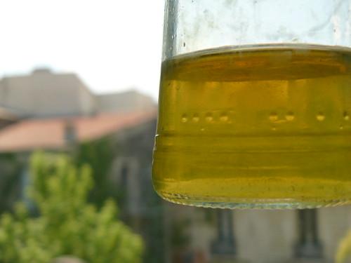 foeniculum vulgare dye bath