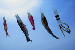 Carp Streamer (h orihashi) Tags: japan pentax  carp carpstreamer   bej k10d pentaxk10d crystalaward citrit cherryontopphotography rubyphotographer damniwishidtakenthat