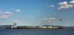 Working the Susquehanna (alextbaum) Tags: bird water rock clouds river boat md gull maryland tugboat barge havredegrace susquehannariver tcf harfordcounty thechallengefactory deletedbythehotboxuncensoredgroup
