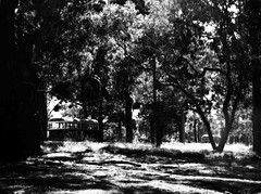 The Bush Tram-Line! (syam C) Tags: trees shadow bw sunlight playground highkey burwood trams eucalypts photoshopelements wattlepark wclass wattles canona710 coffeeshopaction