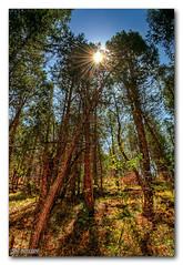 "Forest at Lunch ""Colorado"" (TRIM | Photography) Tags: trees nature colors forest lunch nikon break sunburst coloradolandscape trimphotography"