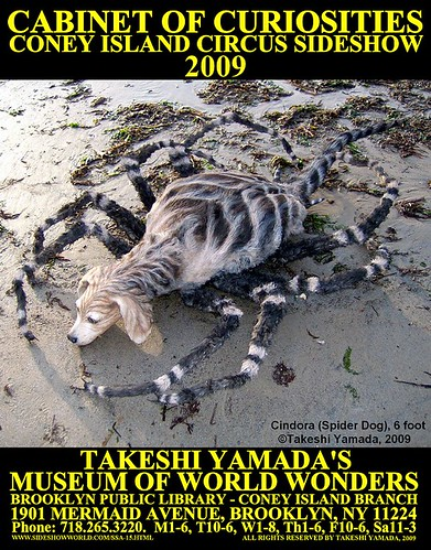"CINDORA, THE 8-LEGGED SPIDER DOG - ""Takeshi Yamada"