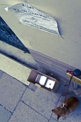 Zettel bitte hngen lassen + nichts dazu stellen :-) (redstarpictures) Tags: dog brown sony hamburg hund giveaway braun pinscher nex germanpinscher rehpinscher zwergpinscher deutscherpinscher miniaturpinscher alleszuverschenken