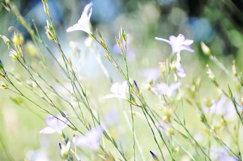 TGIF: just flowers