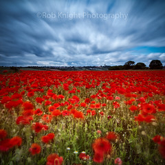 Poppy Motion (ROB KNIGHT photography) Tags: longexposure sky motion clouds movement poppies southyorkshire poppyfield robknight leefilters sladehooton canoneos5dmkii bigstopper axeman3uk robknightphotography canon24105mmefslseries