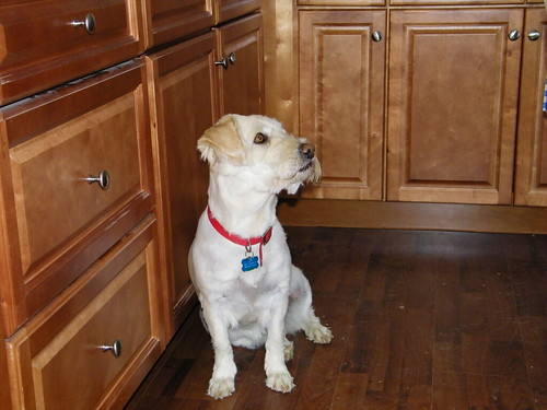Lucy the Habitat Wonder Dog inspects Ms. Russell's new kitchen.