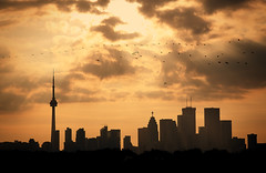 orange sunset  e3 (Morningdew Photography) Tags: city sunset sun toronto ontario canada building tower birds silhouette skyline canon buildings fly cntower to bmo tdcanadatrust td rbc rogerscentre alienskin ef24105l morningdewphotography t1i