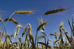 Macro Crops