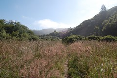 Mt. Tamalpais State Park - Meadow