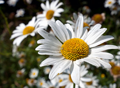 Spider And Daisy (Sean Batten) Tags: uk spider surrey daisy painshillpark
