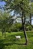 _DSC6481 (nonesmanneslond) Tags: slovenia slovene kitnivhr