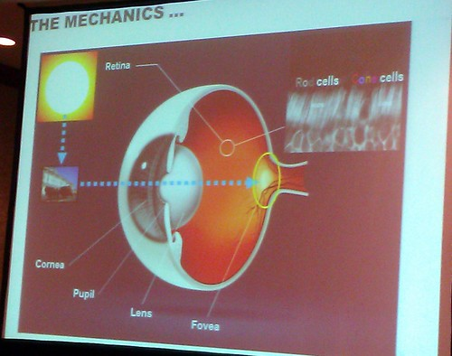 SES: Eye-Tracking Session