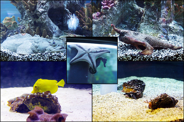 Epcot Living Seas collage