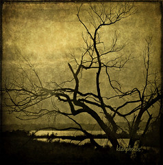 STILL HERE (kluthphotos) Tags: trees sunset sky lake tree texture nature water silhouette shoreline silhouettes textures cityart contemporaryartsociety ghostworks skeletalmess skeletalmesstextures selectbestfavorites selectbestexcellence coppercloudsilvernsun sbfmasterpiece kluthphotos