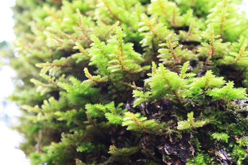 Love that moss