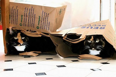 organize_your_cats_23