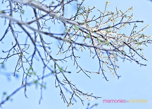 Random-Spring4
