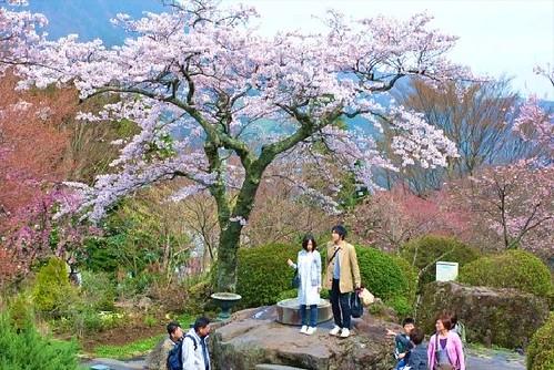 Хрупкая красота Японии japan23 (1)
