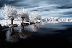 Reflets IRrels! {EXPLORED} ( David.Keochkerian ) Tags: reflection tree ir d70 reflet infrared modified arbre infrarouge naturepoetry lifepixel