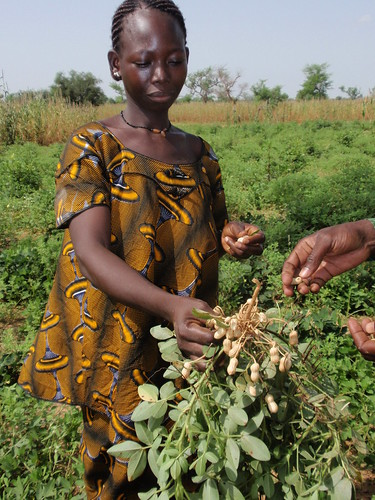 Clemence, a teacher from Ogondougou School, displays the peanuts grown in the school garden to be used as a condiment in the meal provided by USDA.