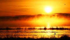 Fuego y Niebla / Fire and Fog (Oscar Martn Antn) Tags: espaa fog sunrise fire spain lagoon amanecer laguna fuego niebla palencia boadadecampos