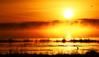 Fuego y Niebla / Fire and Fog (Oscar Martín Antón) Tags: españa fog sunrise fire spain lagoon amanecer laguna fuego niebla palencia boadadecampos