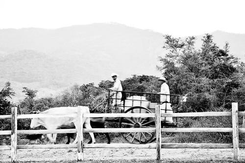 En el ejido Cuauhtémoc (12)