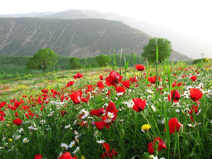 جمال الطبيعة كردستان العراق 5619138545_df940ffc36_b.jpg
