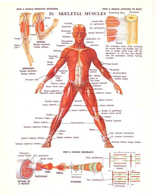 70s medical illustration diagram scans jordan lloyd motion  : medical diagram - findchart.co