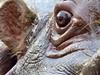 Eye of the hippo (Frans.Sellies) Tags: eye explore hippo hippopotamus nilpferd hippopotame flusspferd hippopotamusamphibius amphibius hipopótamo explored обыкновенный specnature animalkingdomelite kiboko seekoei бегемот اسبآبی ιπποπόταμοσ فرسالنهر нилскиоткоњ p1120447 гиппопота́м