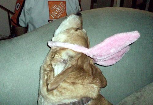 BunnyOuttakes_Sophie_411