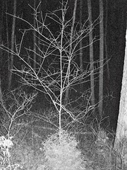 Treefingers (ZackKLS) Tags: trees white black night dark scary woods image tennessee flash surreal abyss treefingers